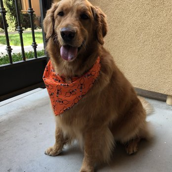 Dog Groomer Newport Beach Ca