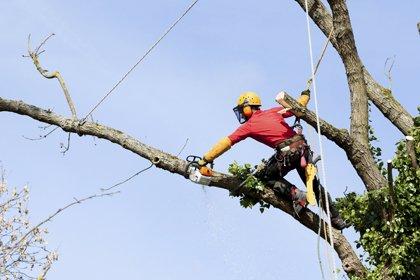 Ax Men Tree Service: 1191 Sumner Rd, Darien Center, NY