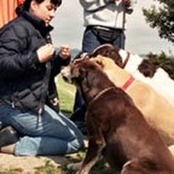 Dogtec Dog Walking Academy Reviews