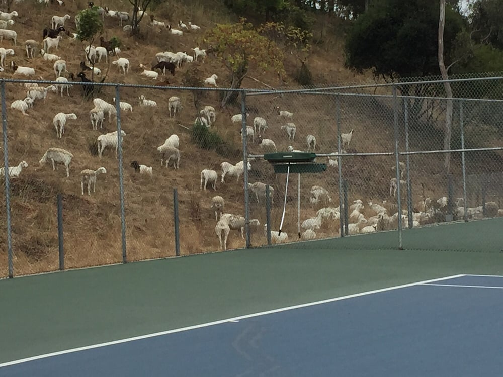 Chabot Canyon Racquet Club