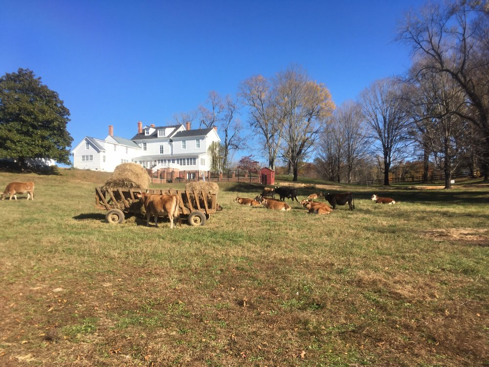 P A Bowen Farmstead: 15701 Dr Bowen Rd, Brandywine, MD