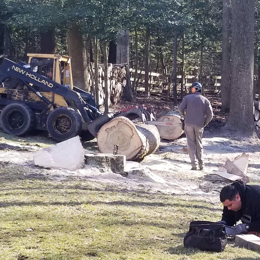 Beaver Tree Service: 1301 South Division, Salisbury, MD