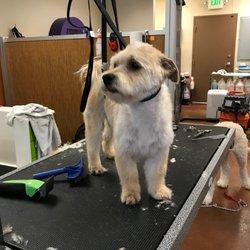 Pup scrub 23 photos 67 reviews pet groomers 9718 ne 119th photo of pup scrub kirkland wa united states after solutioingenieria Choice Image