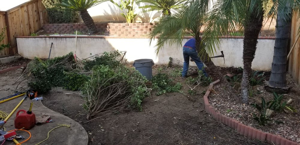 Removing Old Bushes Yelp