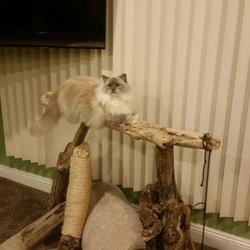 Creekcats Ragdolls Cattery - Cat Breeder - 10 Photos & 13 Reviews
