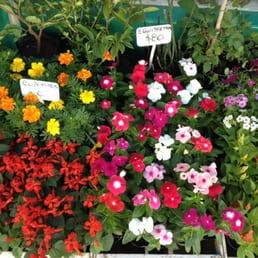 Higa viveros y jardiner a peatonal san mart n 1175 for Vivero el jardin