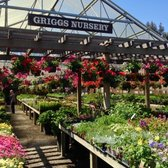 Photo Of Griggs Nursery Carmel Ca United States
