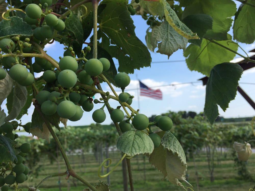 Union Orchard: 2405 S Hwy 75, Union, NE