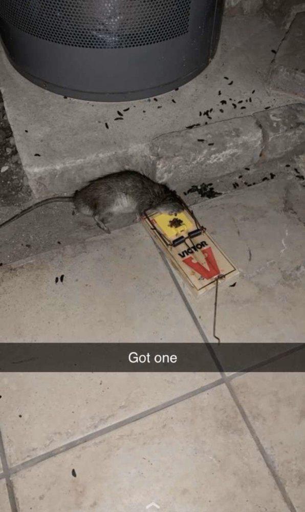 The Pest Control: 2709 S 58th Ct, Cicero, IL