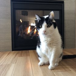 The Family Pet 78 Reviews Veterinarians 6005 15th Ave Nw