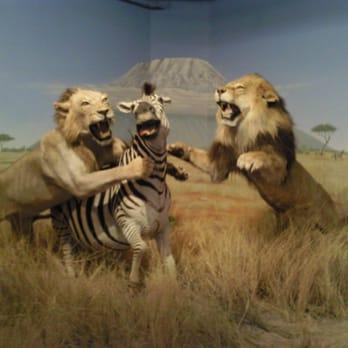 Natural History Museum Las Vegas Coupon