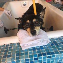 South bark dog wash 136 photos 380 reviews pet groomers photo of south bark dog wash san diego ca united states lelu solutioingenieria Choice Image