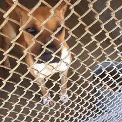 Bakersfield Spca - 10 Reviews - Animal Shelters - 3000 Gibson St ...