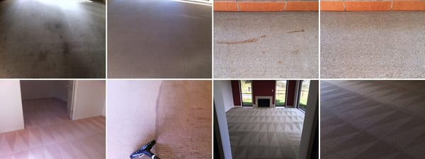 Photo Of Dynaclean Carpet Cleaning Pest Control Gold Coast Queensland Australia