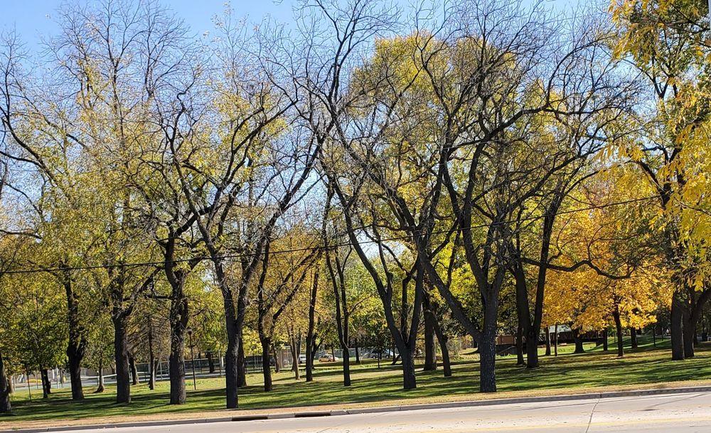Dartts Park: 429 Mineral Springs Rd, Owatonna, MN