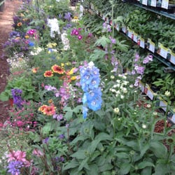 Photo Of Holly Acres Nursery And Garden Center Elizabeth Co United States