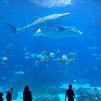 Georgia Aquarium 3089 Photos 1458 Reviews Aquariums