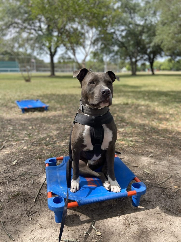 Off Leash K9 Training: Houston, TX