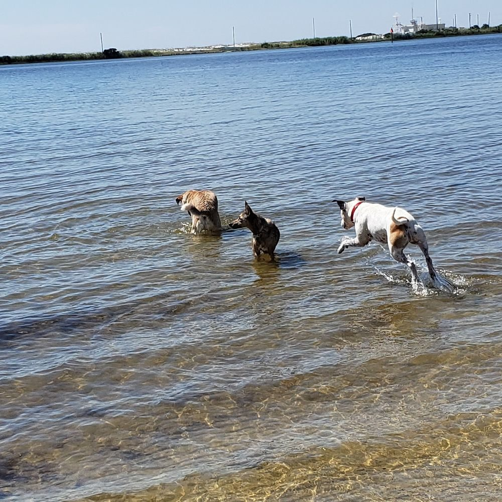 Willow's Way Dog Training: Crestview, FL
