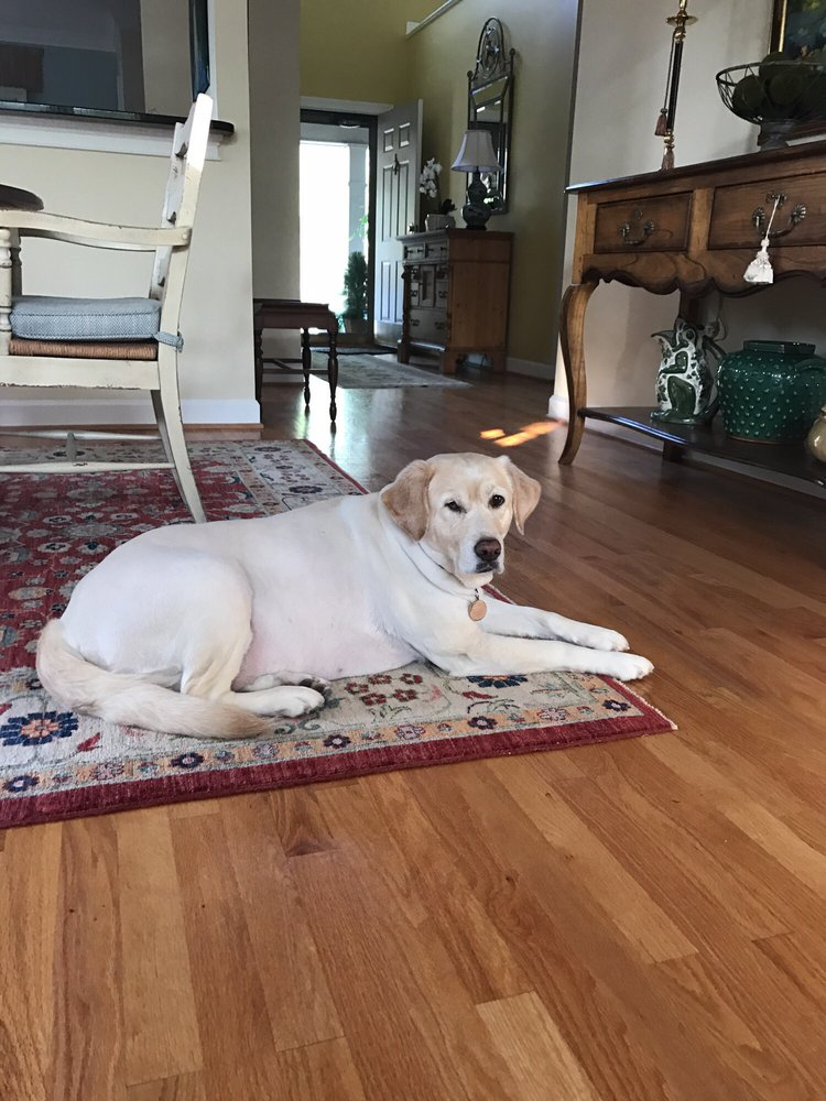 Dogs' Best Friend: 225 Pinehurst Ave, Southern Pines, NC