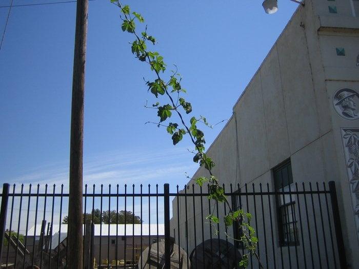 American Hop Museum: 22 S B St, Toppenish, WA
