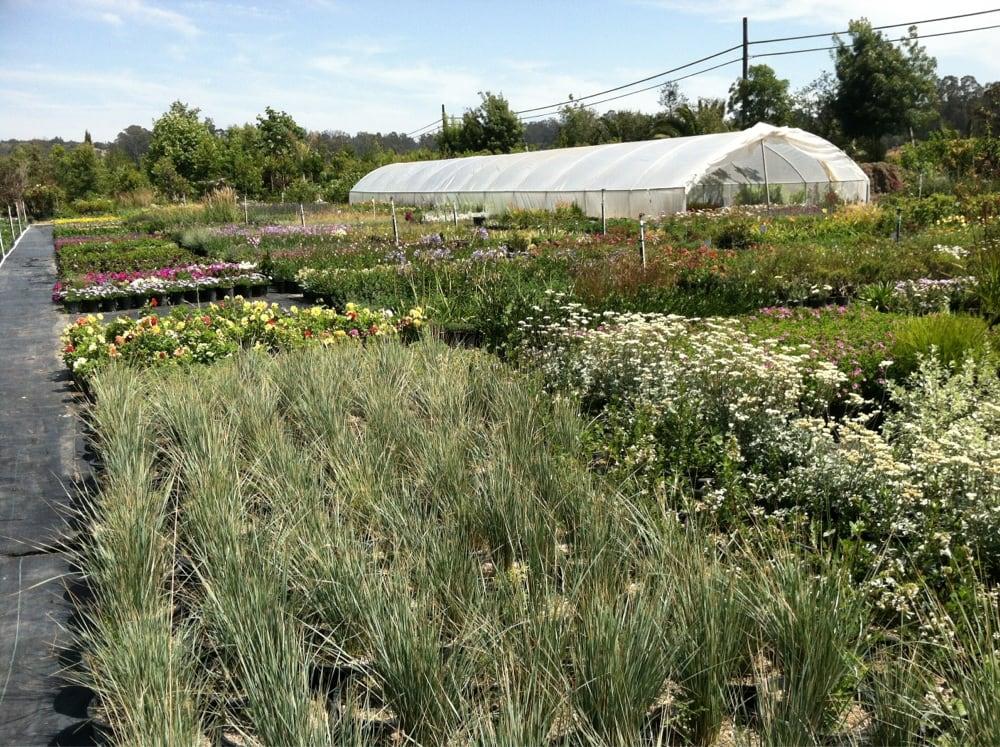 Ramirez Nursery: 2600 Fowler Ln, Arroyo Grande, CA