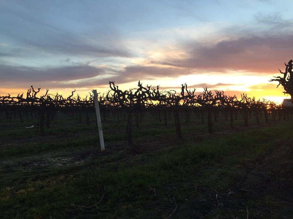Delicato Vineyards