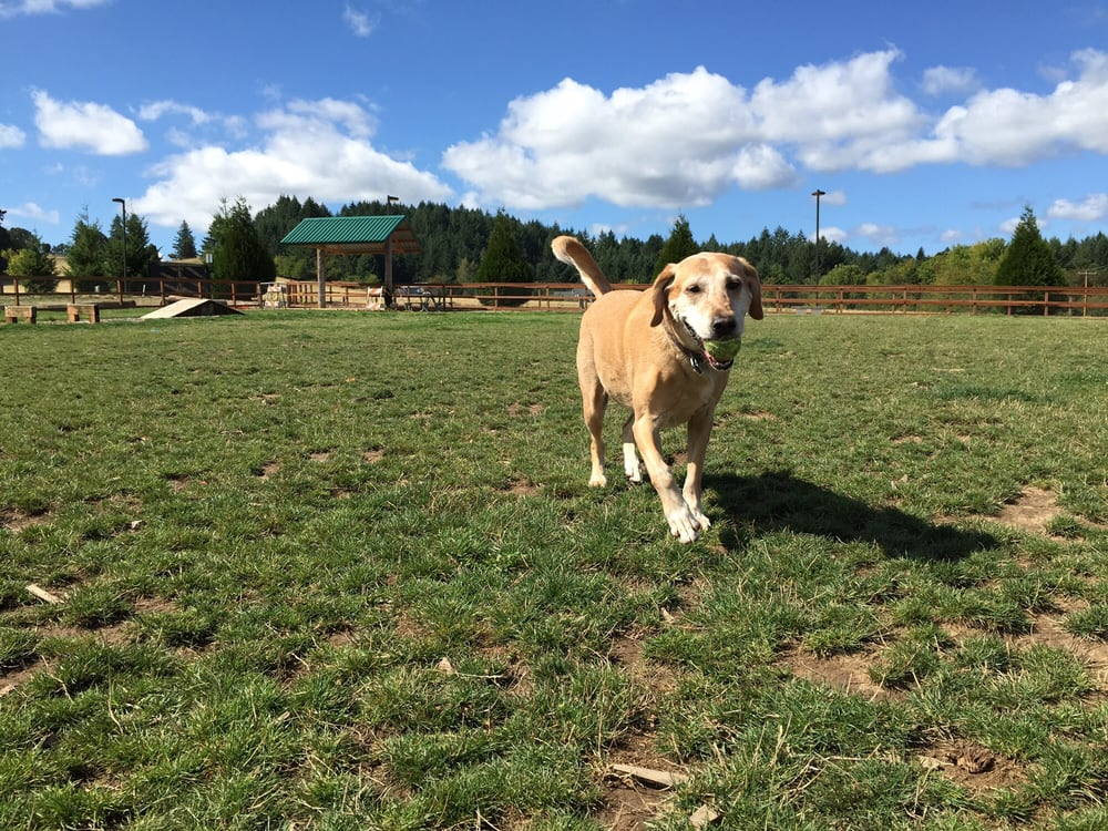 Thatcher Park Off Leash Dog Park: 750 NW David Hill Rd, Forest Grove, OR