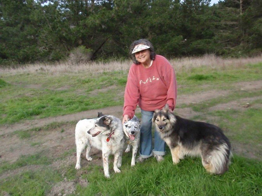 Best Dog Boarding In Northern California