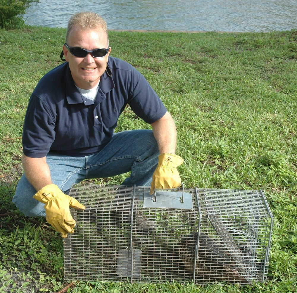 wildlife removal specialist