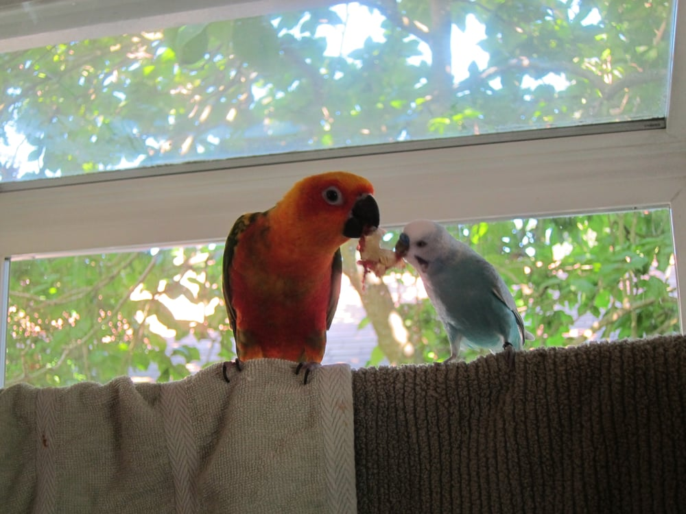 Pampered Parrot Behavior Coaching and Boarding - 10 Reviews