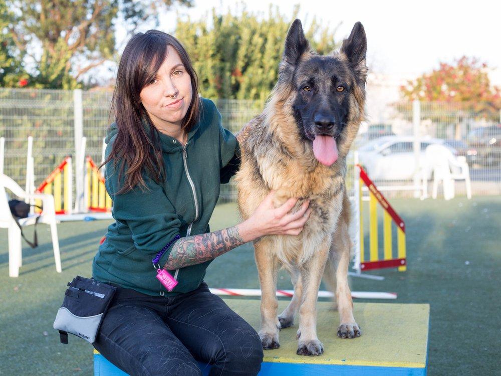 Agility Behavior Training Dog Asheville