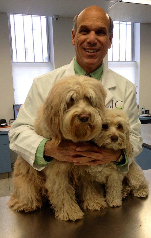 Long Island City Veterinary Center Long Island City Ny