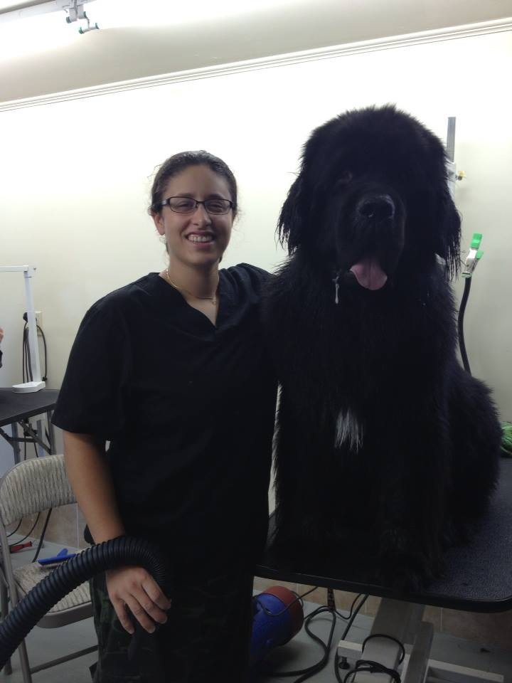 Dog Grooming Reviews Sydney