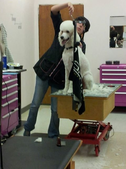 Dog Grooming Mount Venon Wa