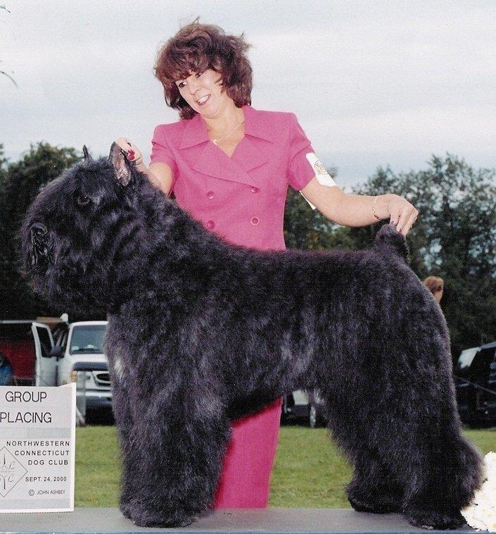 Dog Training Rowley Ma