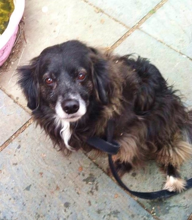 Sugar Mutts Rescue Dog