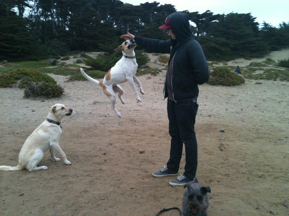 Free Online Dog Walking Certification
