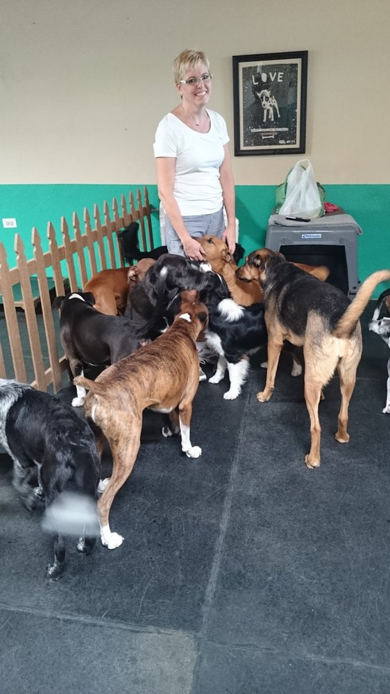 Dawg house day care boarding 12 reviews pet sitting for Dog boarding places near me