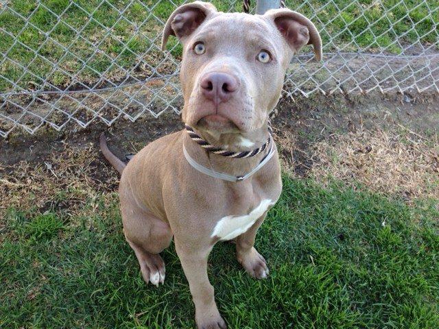Ventura County Animal Services (VCAS) Custom Ink Fundraising |Ventura County Animal Services