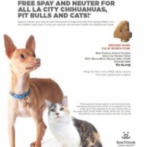 Free Pitbull Chihuahua Cats Spay Neuter For Los Angeles City Residents