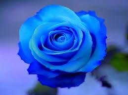Rose J.