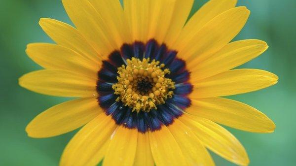 Flower09 C.
