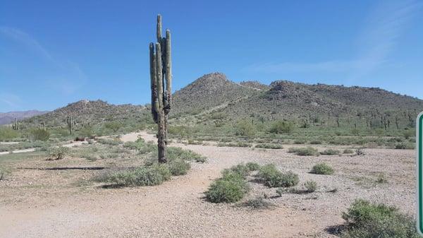 Desert S.