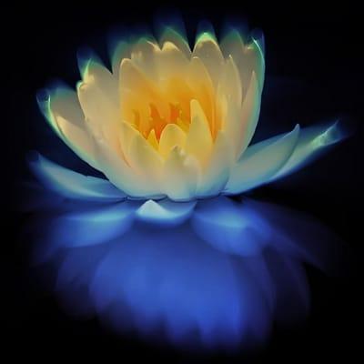 Lotus F.