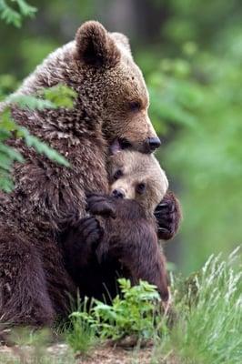 Baby Bear H.