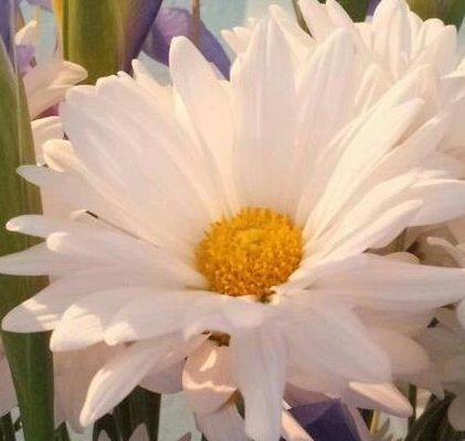 Daisy K.