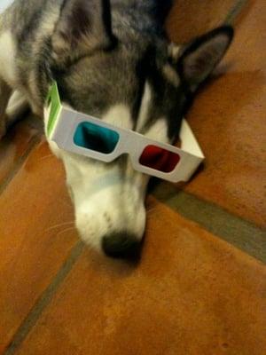 Resultado de imagen para husky spa