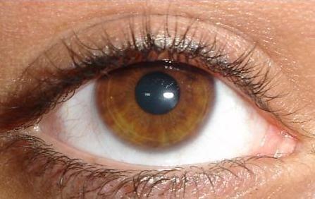 Eyeland L.