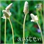 Austen H.